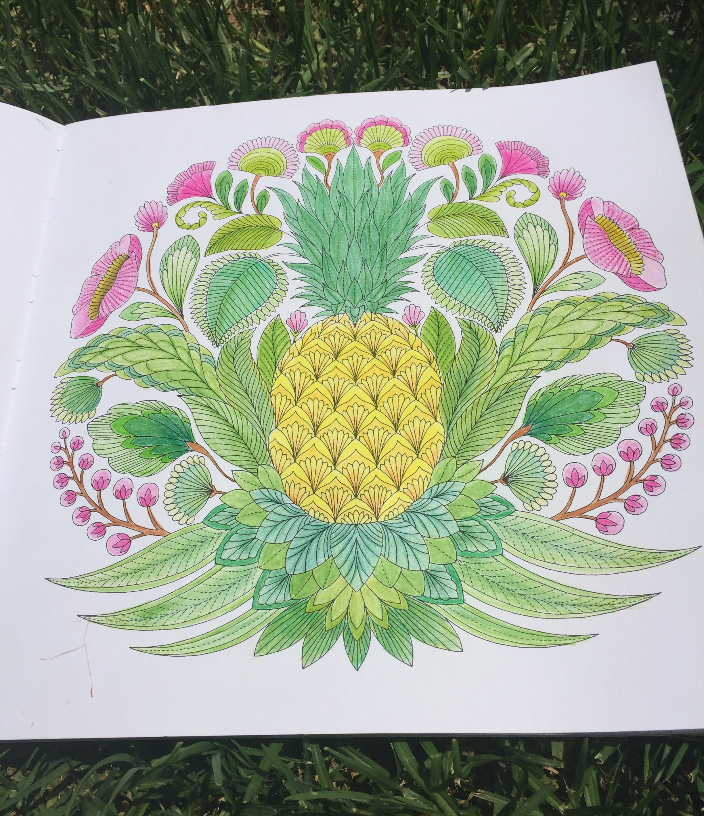 Tropical World Coloring Book : Tropical Wonderland Chronically Batgirl Colours
