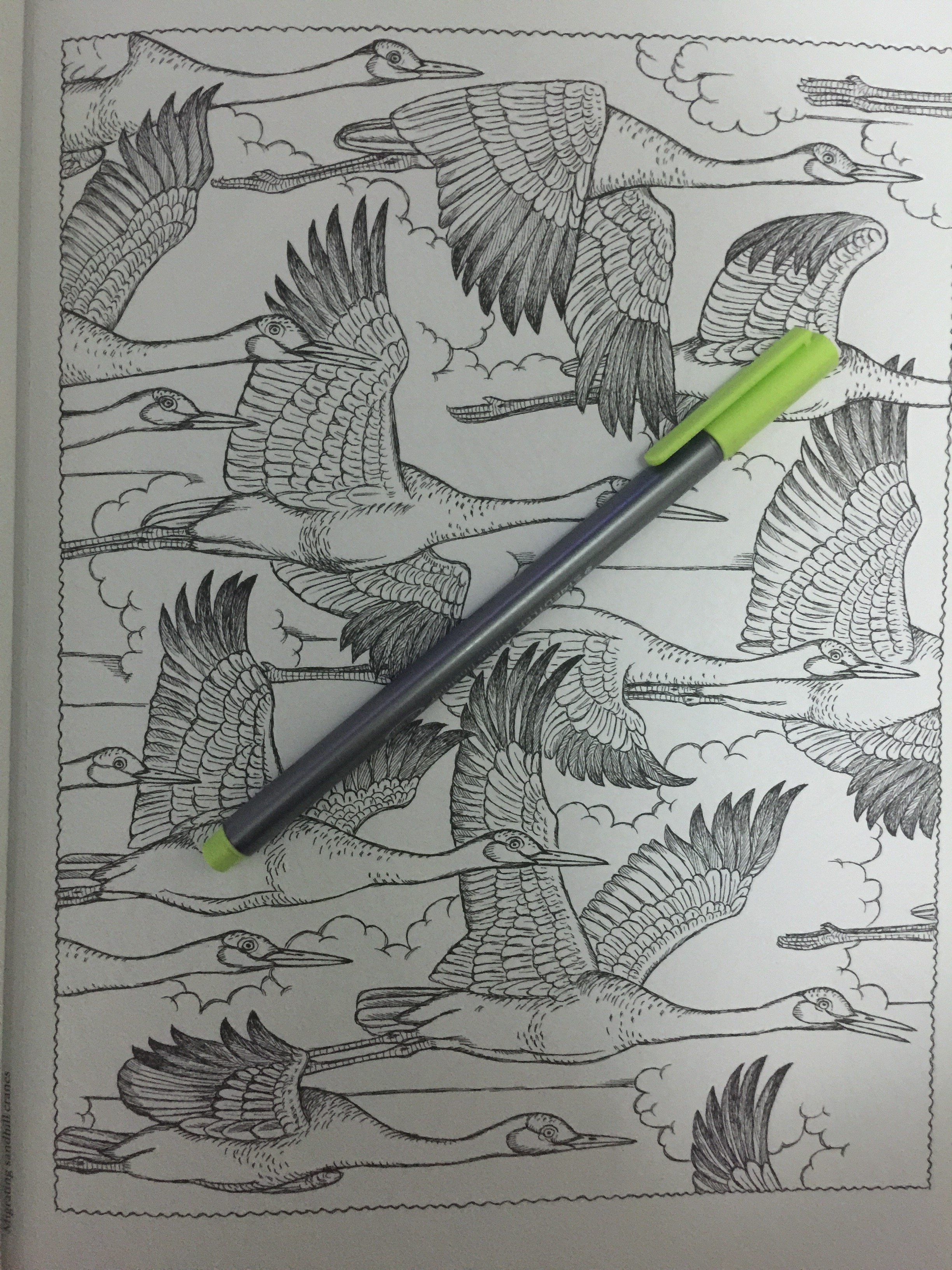 Adult coloring book reviews completed colour colouring pencils pens book art relief books stress relief  creative haven dover naturescapes animal coloring