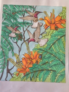 coloring animals hidden reviews colouring art therapy color nature completed animals colour amazon